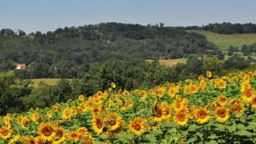 Camp La Pastorale – France